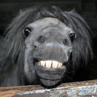 funniest_horse_ever.jpg